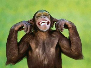 not-listening-chimp