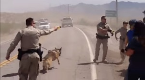 Federal Troops attacking locals with tazers and attack dogs.